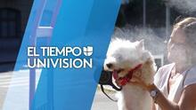 Cuide a sus mascotas ante las condiciones calurosas que se registrarán en San Antonio