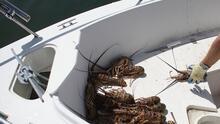 Reportan dos incidentes, uno de ellos mortal, en medio de la minitemporada de caza de langostas en Florida